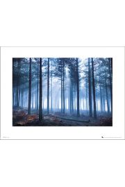 Tom Mackie Forest - art print