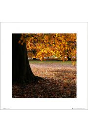 Autumn Tree - art print
