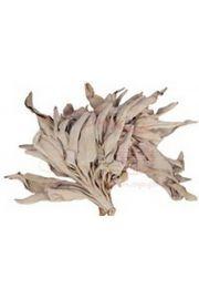 Biała szałwia - susz