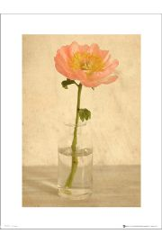 Pink Flower Bottle - plakat premium