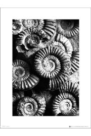 Fossils Black And White - art print