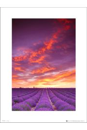 Tom Mackie Purple Field And Sky - art print