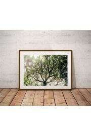 Foggy tree - plakat premium