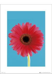 Flower Bright - art print